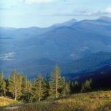 Fir trees in mountains at sunset. Carpathian mountain range, Ukraine Stock Photos