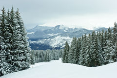 Fir Trees On Winter Mountain Stock Image