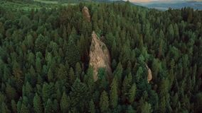 Fir trees rocks nature shooting from quadrocopter. Hd nature stock video footage