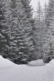 Fir trees and snow covered track under snowfall Royalty Free Stock Photos