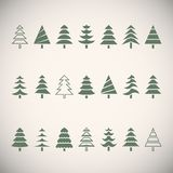 Fir trees Stock Photography