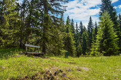 Fir trees and the sunny lawn with bench. In Durmitor National Park in Montenegro Royalty Free Stock Photos