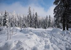Fir trees under the snow. Winter landscape of  the mountain forest Stock Photo