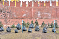 Fir-trees at the wall of Kremlin after a winter Stock Photos