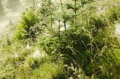 Fir trees with web Stock Photos