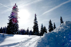 Fir trees by winter Stock Images