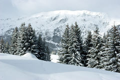 Fir trees on winter mountain Stock Image