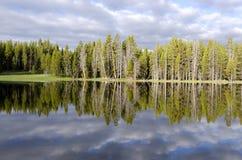 Fir trees on Yellowstone Lake Stock Photo