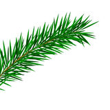 Fir twig. Vector fir twig for christmas decoration Stock Image