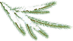 Fir Twig. Winter fir twig isolated on white background (rasterize from vector Stock Photo