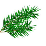Fir twig. Vector fir twig for christmas decoration Royalty Free Stock Images