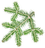 Fir twig. On a white background Royalty Free Stock Image