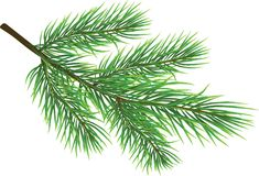 Fir Twig. Isolated on white (rasterize from Royalty Free Stock Images