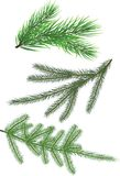 Fir twig-collection Stock Image