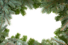 Fir twig frame Stock Photography