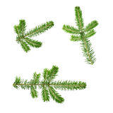 Fir twig Stock Photos