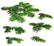 Fir twigs perspective white background Royalty Free Stock Photo