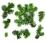 Fir twigs white background Royalty Free Stock Photo