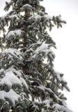 Fir under snow Royalty Free Stock Photos