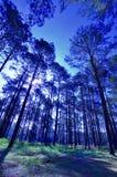 Fir wood Stock Photos