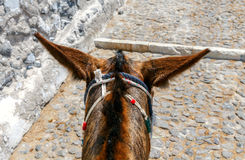 Fira. Donkeys on the island of Santorini. Royalty Free Stock Image