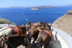 Fira Donkeys Santorini Stock Photography