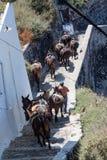Fira Santorini åsnor Royaltyfria Foton