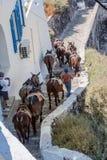 Fira Santorini Donkeys Stock Photos