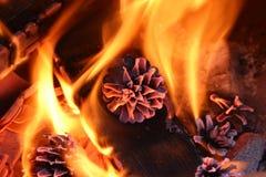 Fircone auf Feuer Stockfotografie