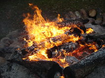 Fire. From trees in a wood during rest Royalty Free Stock Photo