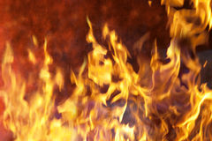 Fire. And flames with a burning dark red-orange background Royalty Free Stock Photo