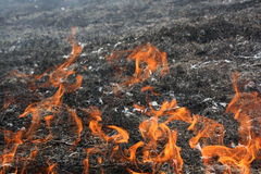 Fire. Forest fire in summer day in forest Royalty Free Stock Photo