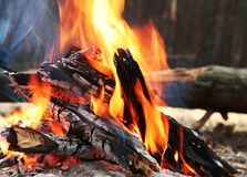 Fire. Camping fire on the forest royalty free stock images