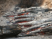 Fire. Burned trees Royalty Free Stock Photography