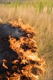 Fire. The dry grass in the field burns Royalty Free Stock Photo