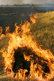 Fire. The dry grass in the field burns Stock Images
