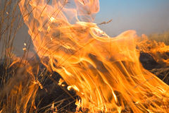 Fire. The dry grass in the field burns Stock Photo