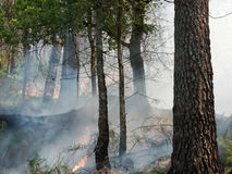 Fire. In the forest Stock Images