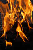 Fire. Burning orange fire of intensely high temperature Royalty Free Stock Photo