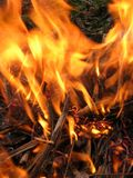 Fire. Of burning dry grass close-up Royalty Free Stock Photos