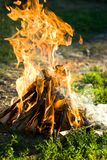 Fire. Close-up of a camp fire with burning wood detail Stock Image