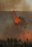 Fire. In forests  - big destruction Stock Images