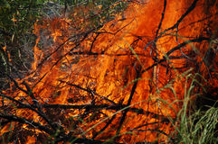 Fire. Big fire in the forest Royalty Free Stock Photos