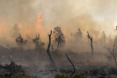 Fire. Big fire and forest in Portugal - Europe Stock Photography