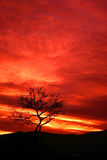 Fire. Tree silhouetted agaianst a firey orange and red sunset Royalty Free Stock Photos