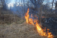 Fire. Is burning dry grass and bushes Royalty Free Stock Photography