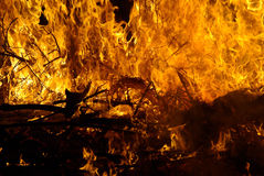 Fire. Destroyed vegetation of a forest Royalty Free Stock Photography