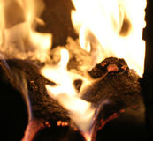 Fire. In a place Royalty Free Stock Photo