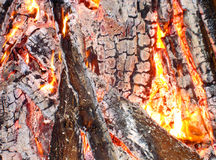 Fire anatomy. A detail of burning woods Royalty Free Stock Image