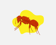 Fire Ant Vector. Fire Ant Insect Vector Illustration Stock Photo